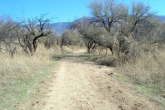 Horse Trail Catalina State Park