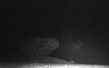 Mouse out in yard at 4AM