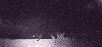A Cat Prowling Around At Night