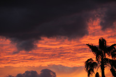 Dark Clouds, Palm Tree And Sunset