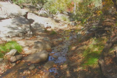 Flowing Water In Madera Canyon AZ