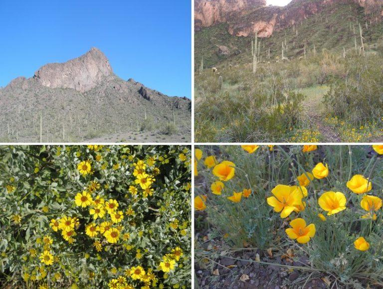 Pictures of different cactus - Picacho Peak Arizona Photo Collage