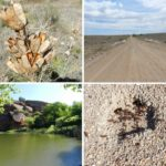 Colorado Reservoir, Road, Dried Plant and Ant Hill
